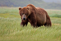 Alaska: Kodiak  and Katmai National Park